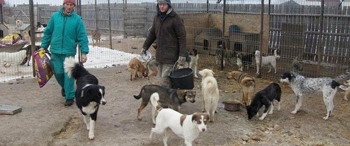 Neues aus Gheorgheni und Reisebericht vom März 2014