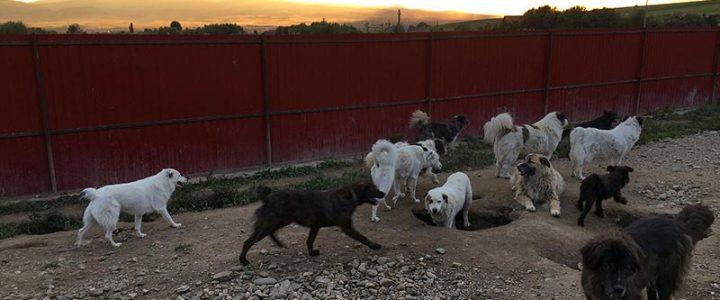 Reise ins Tierschutzzentrum Ditrău vom 14. – 24. Juli 2017