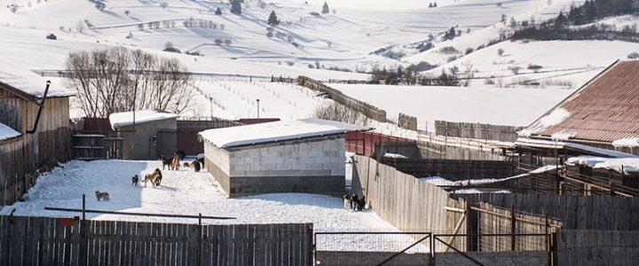 Arbeitsaufenthalt in Ditrău 22. – 25. Februar 2018