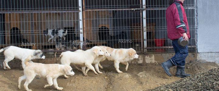 Kurzbericht über einen Kurztrip ins Tierschutzzentrum Ditrău 31.10. – 4.11.