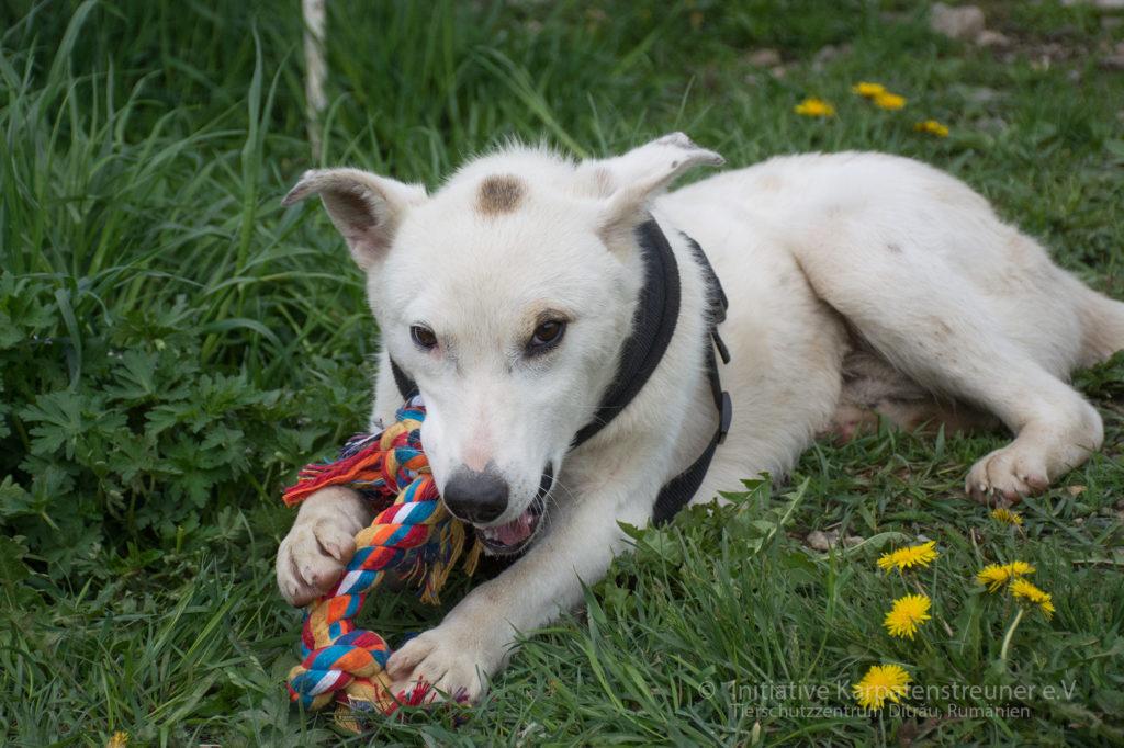 Chip - ein freundlicher verspielter Junghund