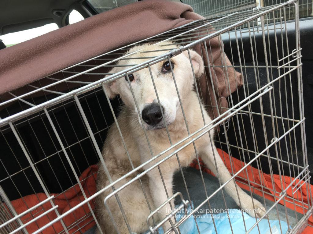 Chip bei seiner Ankunft im Tierheim am 10.5.2019