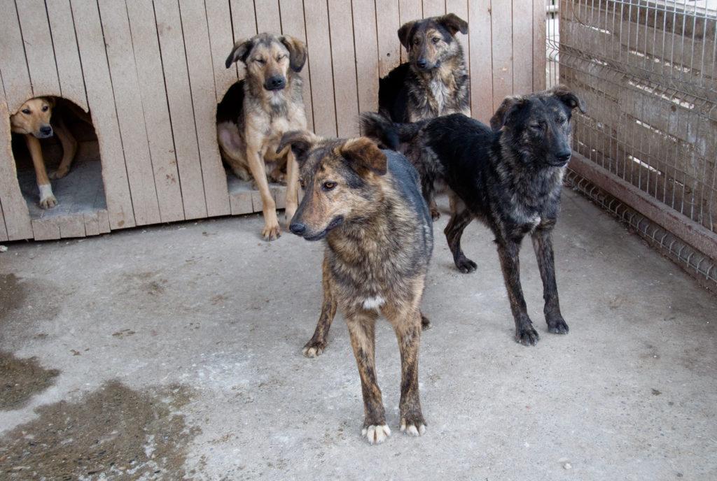 ein Zwinger für fünf große Hunde