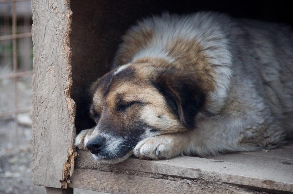 Oria schläft in einer Hütte