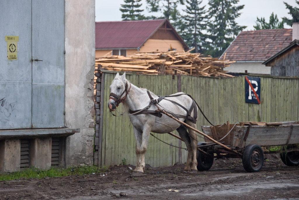 ein Pferd vor einem einfachen Karren