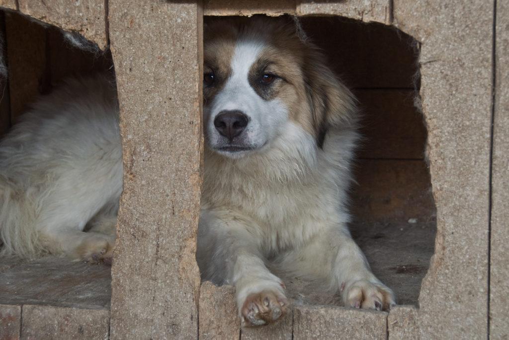 Hund Roxy in einer Hütte