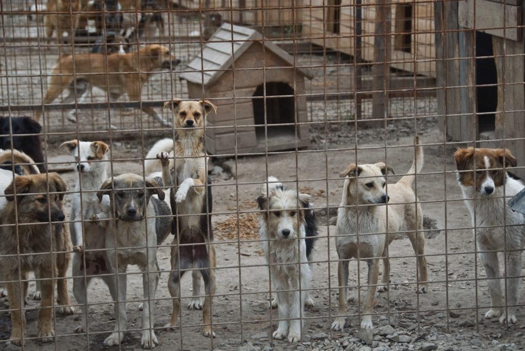 Viele Hunde stehen am Zaun