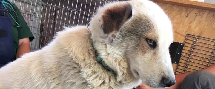 Notfall – Toby leidet sehr und sucht dringend ein Zuhause oder eine Pflegestelle