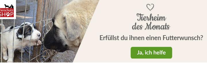 """Juhuuu, wir sind """"Tierheim des Monats Januar 2020"""" beim Tierschutz-Shop"""