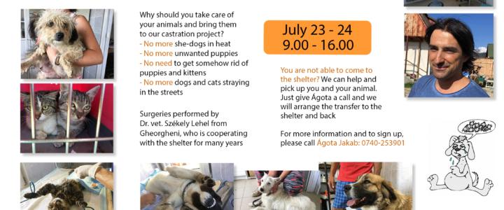 KASTRATIONSAKTION im Tierschutzzentrum Ditrău am 23. und 24. Juli 2020