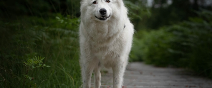 Wenn ein (adoptierter) Hund entläuft….